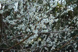 早咲きの花