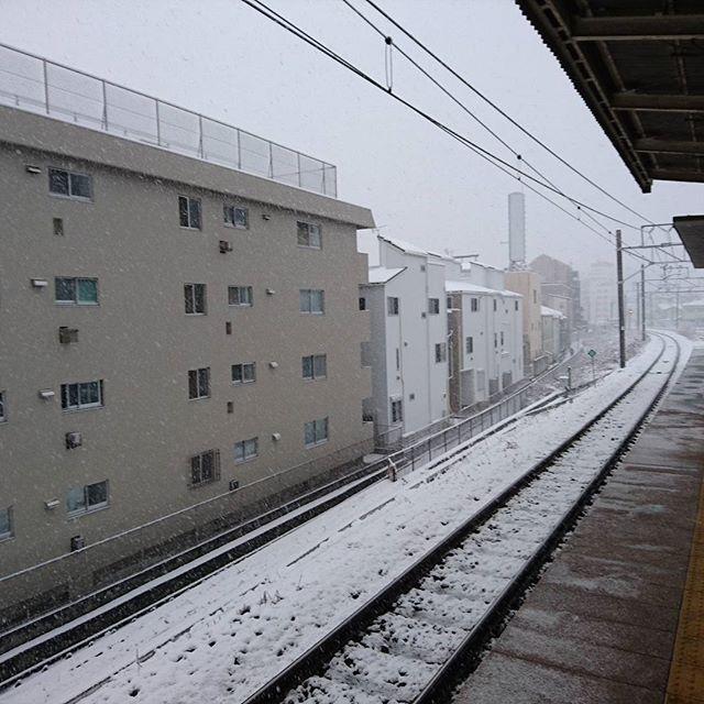 菊名の方が雪多い