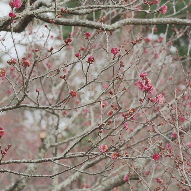 梅はまだまだ。#touring