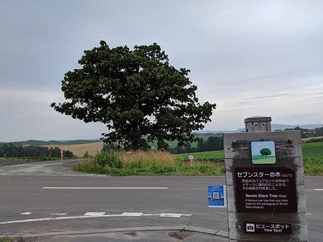セブンスターとケンメリの木#touring #touringbike